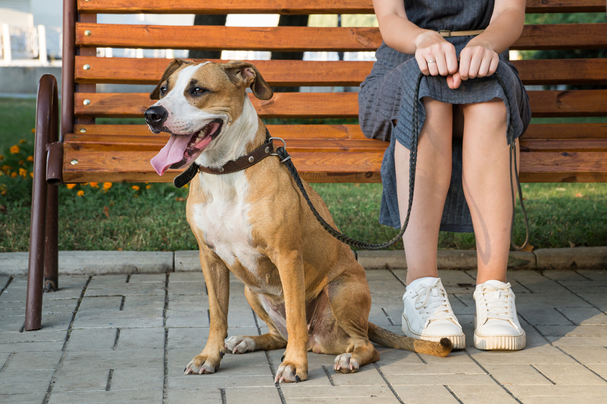 Pet Etiquette in Your Apartment Complex